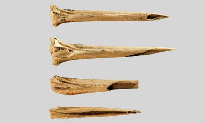 4 đoạn xương cổ chân gà tây dùng làm dụng cụ xăm hàng nghìn năm trước. Ảnh: