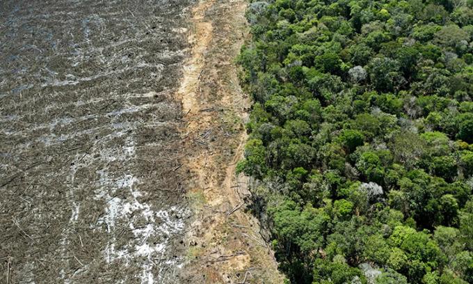 Một cánh rừng bị tàn phá nghiêm trọng ở bang Mato Grosso, Brazil. Ảnh: AFP.