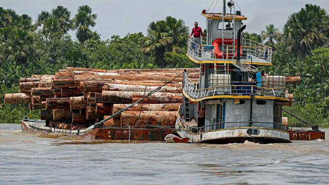 Cây rừng Amazon bị đốn hạ được vận chuyển trên sông. Ảnh: Tarso Sarraf/AFP.