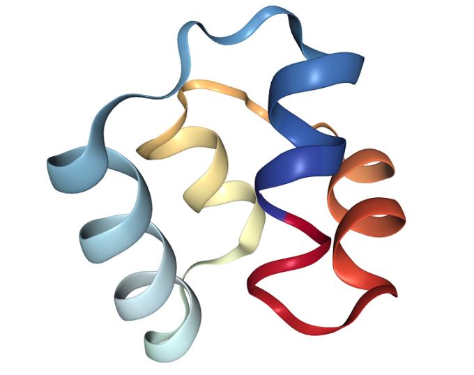 Cấu trúc protein của hợp chất này bền, khó bị phá vỡ. Ảnh: NNC.