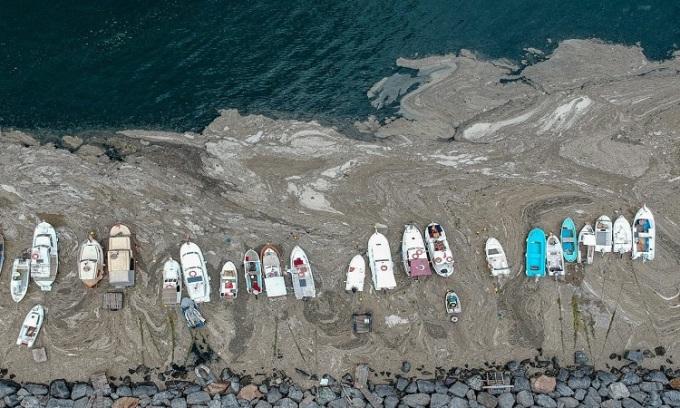 Những tàu thuyền đánh cá không thể hoạt động do chất nhầy biển. Ảnh: AFP.