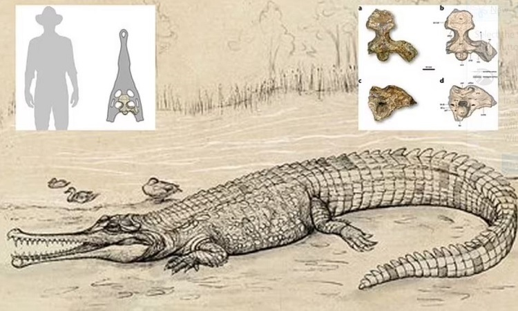 Cá sấu tiền sử to ngang xe buýt