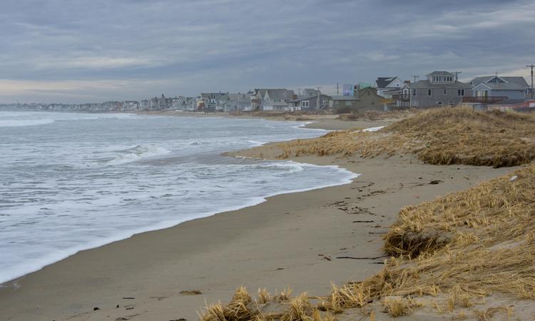 Hàng triệu xác ruồi dạt vào bãi biển Mỹ