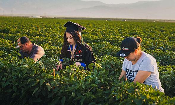 Nữ sinh chụp ảnh tốt nghiệp trên cánh đồng