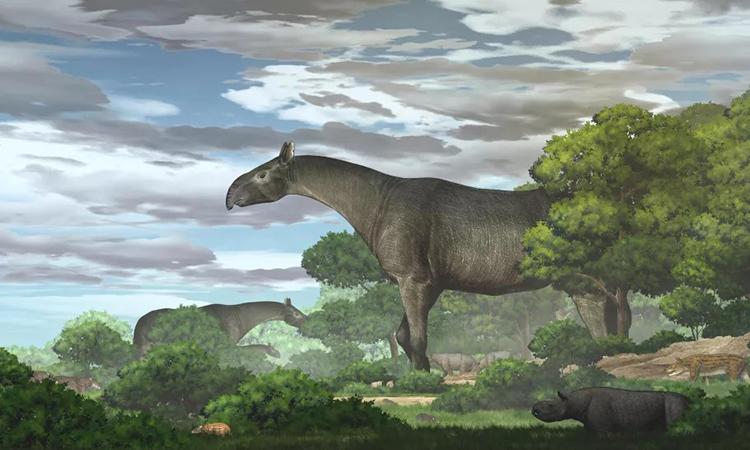 Phát hiện tê giác tiền sử nặng bằng 4 con voi châu Phi