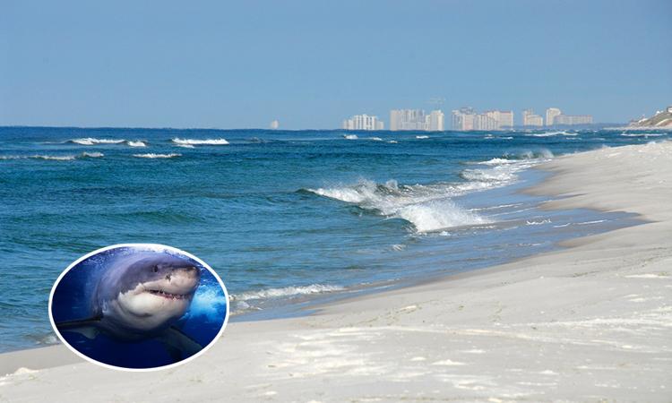 Cá mập cắn người đi biển