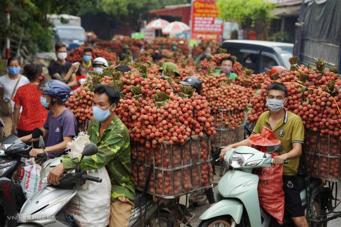 Nông dân Lục Ngạn, Bắc Giang chở vải thiều đi cân, tháng 6/2021. Ảnh: Ngọc Thành