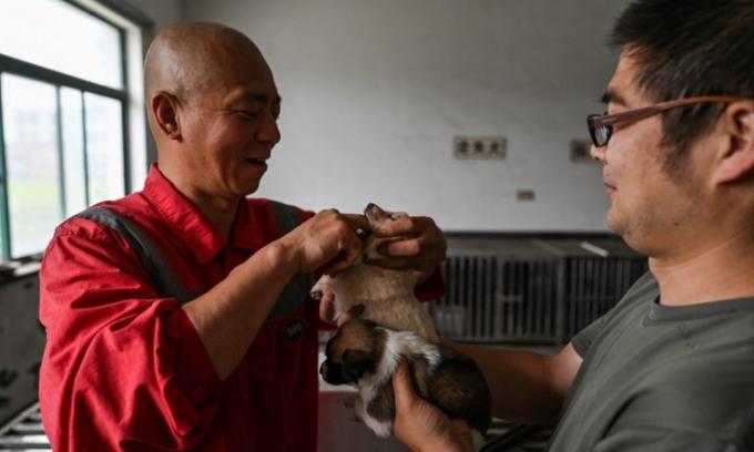 Thầy Zhi Xiang mặc đồ bảo hộ bón thuốc cho những con chó thầy cưu mang ở Thượng Hải hôm 26/5. Ảnh: AFP.
