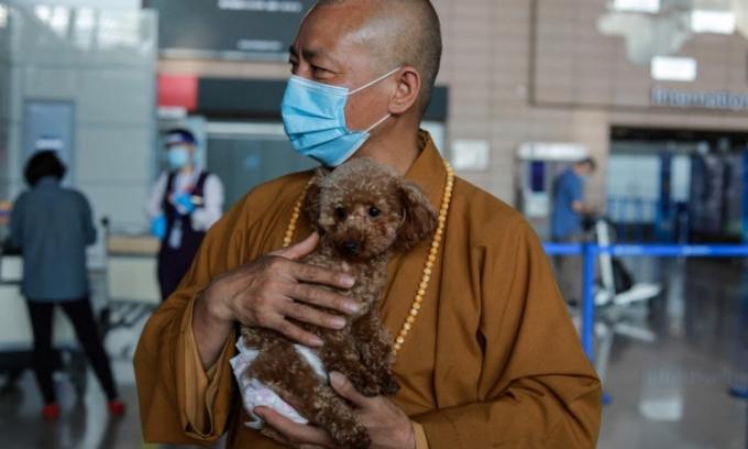 Thầy Zhi Xiang tiễn một con chó nhỏ về nhà chủ mới ở Mỹ tại sân bay quốc tế Phố Đông ở Thượng Hải hôm 26/5. Ảnh: AFP.