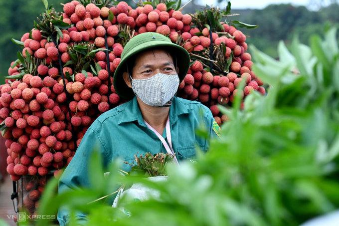Nông dân Bắc Giang đem vải thiều đi cân, tháng 6/2021. Ảnh: Giang Huy