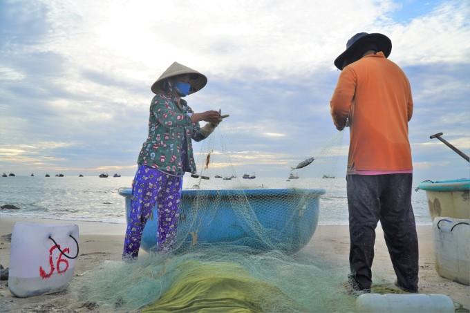 Vợ chồng anh Hà Văn Bông gỡ lưới cá trích chuẩn bị mang ra chợ Mũi Né bán. Ảnh: Việt Quốc.