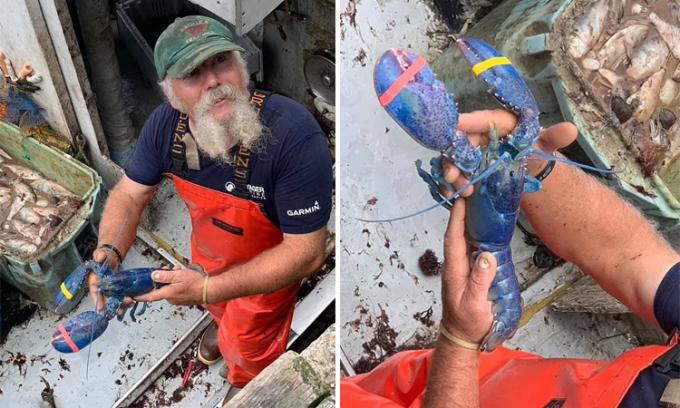 Toby Burnham tạo dáng chụp ảnh với tôm hùm xanh trước khi thả con vật.  Ảnh: Captain Joe and Sons.