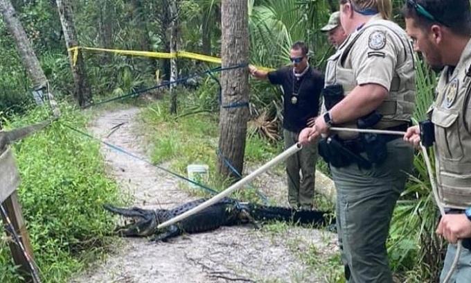 Các nhân viên bảo vệ động vật hoang dã đã bắt được con cá sấu hung dữ.  Ảnh: CNN.