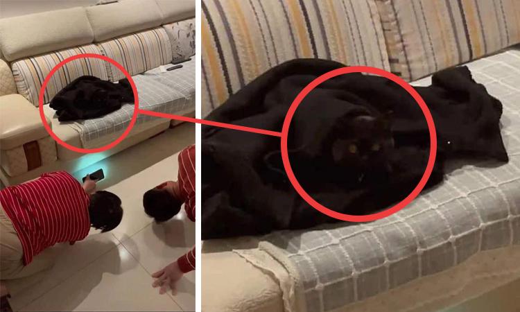 Cả nhà đi tìm dù mèo ở trước mặt