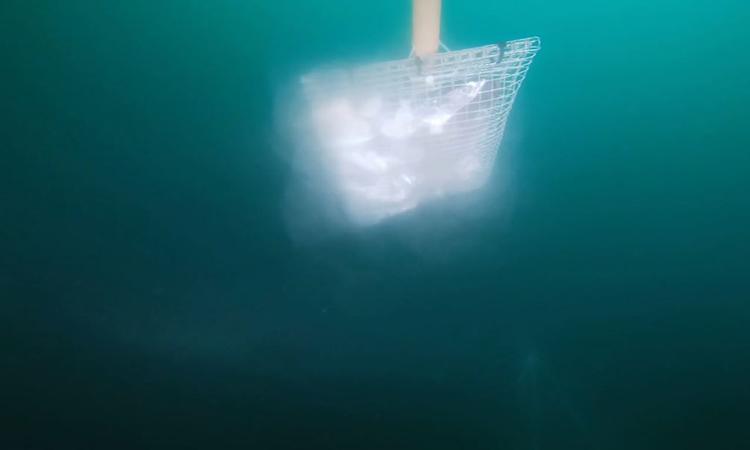 Cảnh quay hiếm về cá mập 6 mang khổng lồ