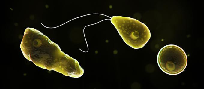 Amip ăn não người Naegleria fowleri. Ảnh: CDC