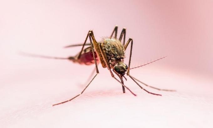 Biến đổi gene khiến muỗi không trông thấy người