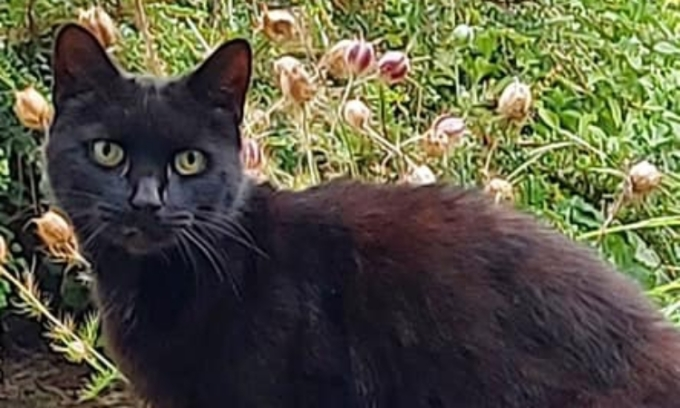 Con mèo Piran của người phụ nữ cao tuổi gặp nạn. Ảnh: Facebook/Bodmin Police.