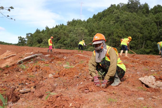 Công nhân trồng cây xanh tại dự án điện gió Phong Nguyên. Ảnh: Hoàng Táo