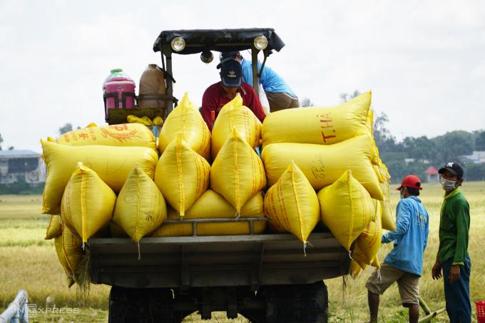 Một số nông sản bị ảnh hưởng do đứt gãy khâu vận chuyển - 1