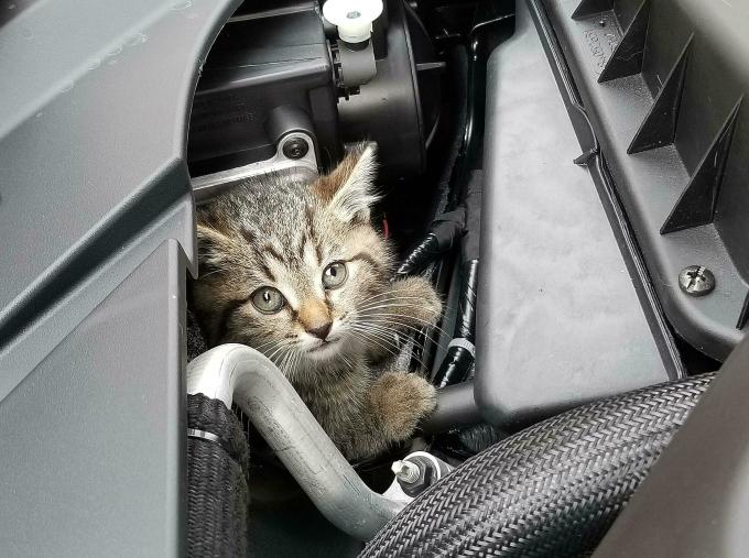 Nuôi mèo là một cách đuổi chuột. Ảnh: Redd