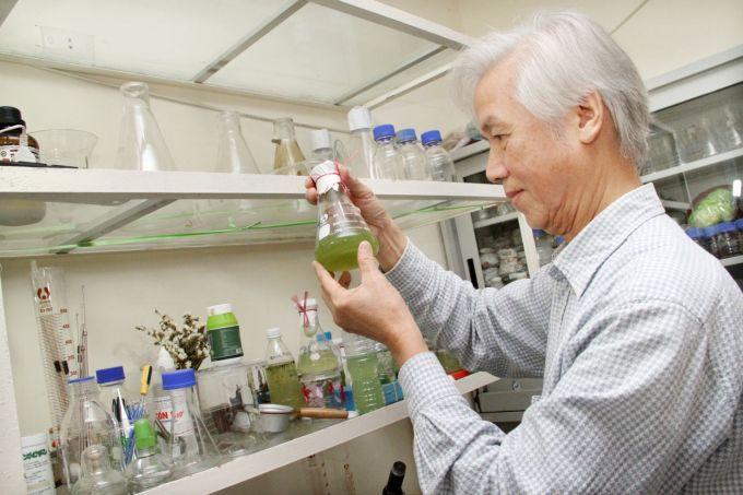 GS Dương Đức Tiến say mê nghiên cứu tảo để ứng dụng vào đời sống. Ảnh: Trần Hải