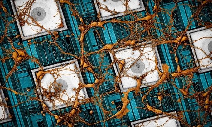 Samsung sao chép não người vào chip nhớ