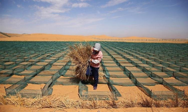 Lưới rơm ngăn sa mạc 'nuốt chửng' thành phố